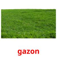 gazon picture flashcards