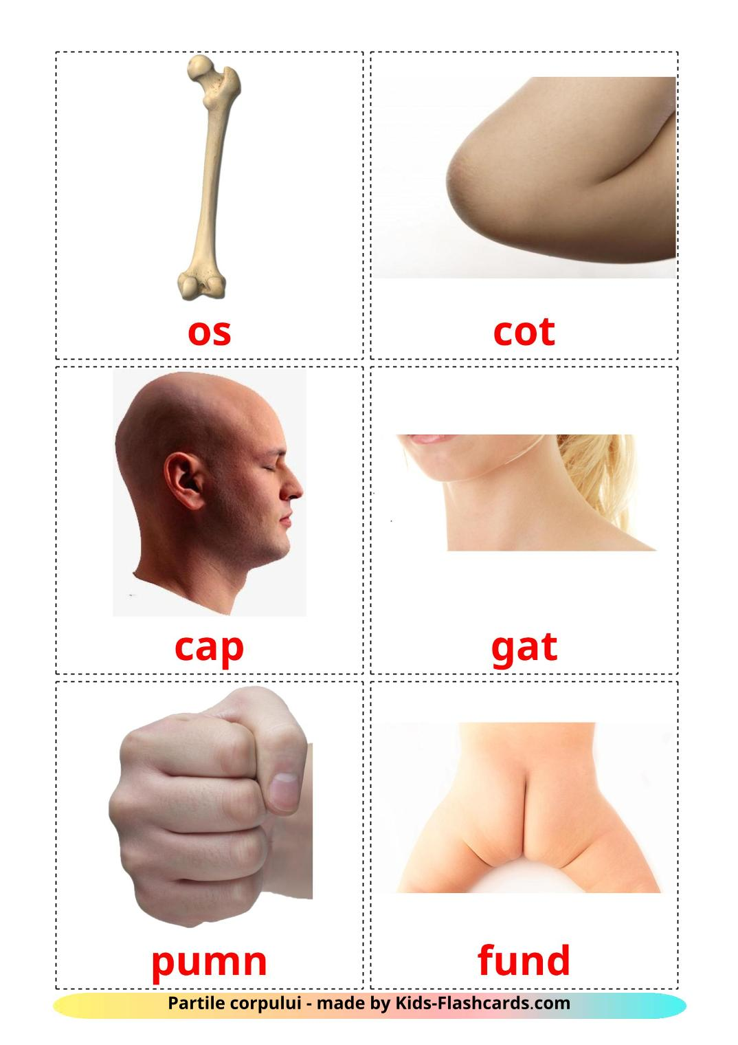 Body Parts - 26 Free Printable romanian Flashcards