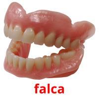 falca picture flashcards