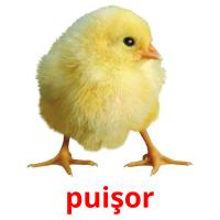 puişor picture flashcards