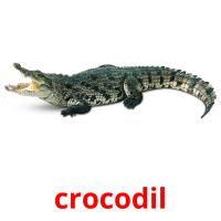 crocodil picture flashcards