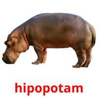 hipopotam picture flashcards