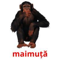maimuță picture flashcards
