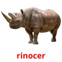 rinocer picture flashcards