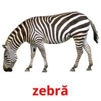 zebră picture flashcards