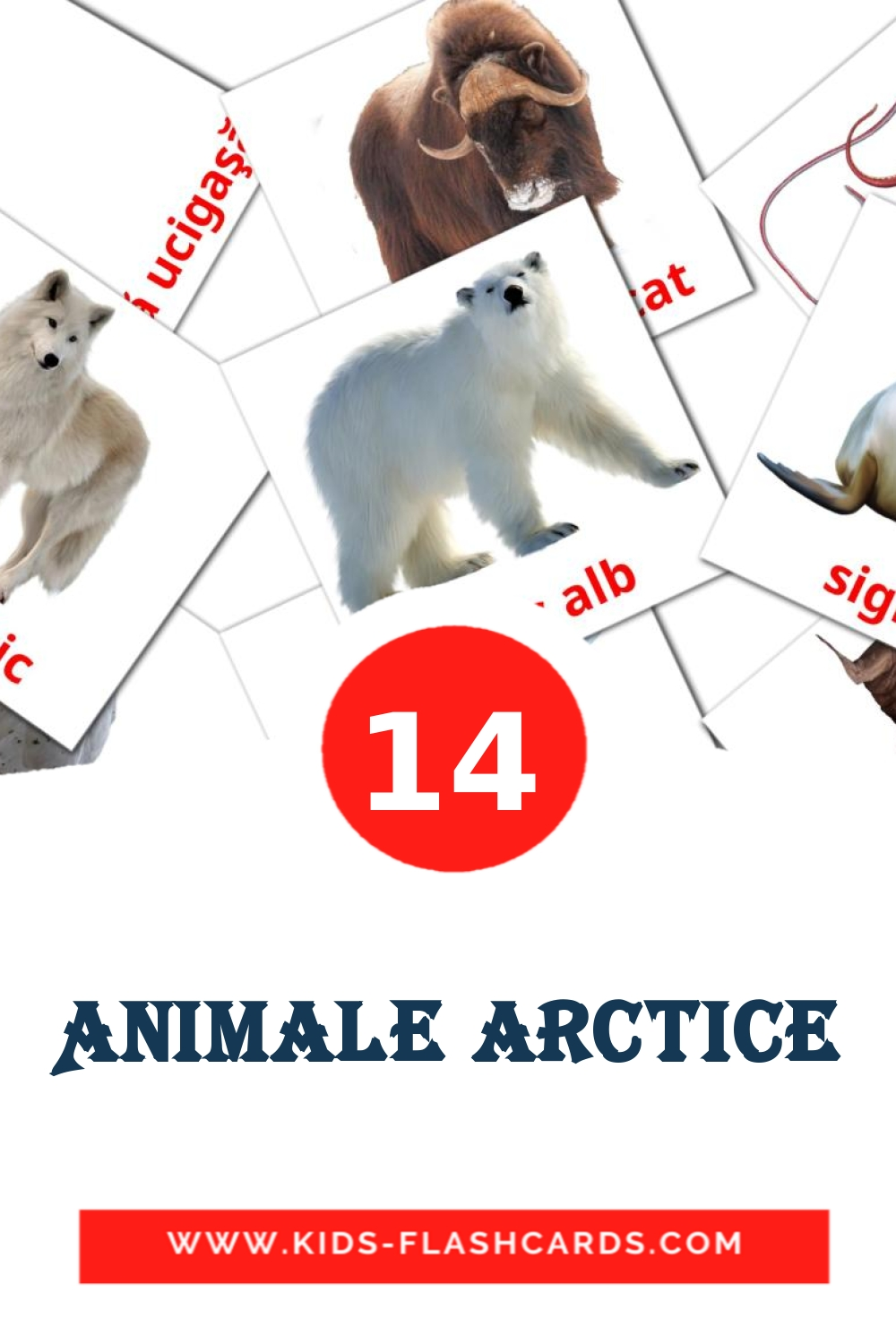 14 Animale arctice Picture Cards for Kindergarden in romanian