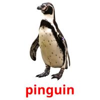 pinguin picture flashcards