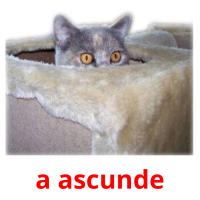 a ascunde picture flashcards