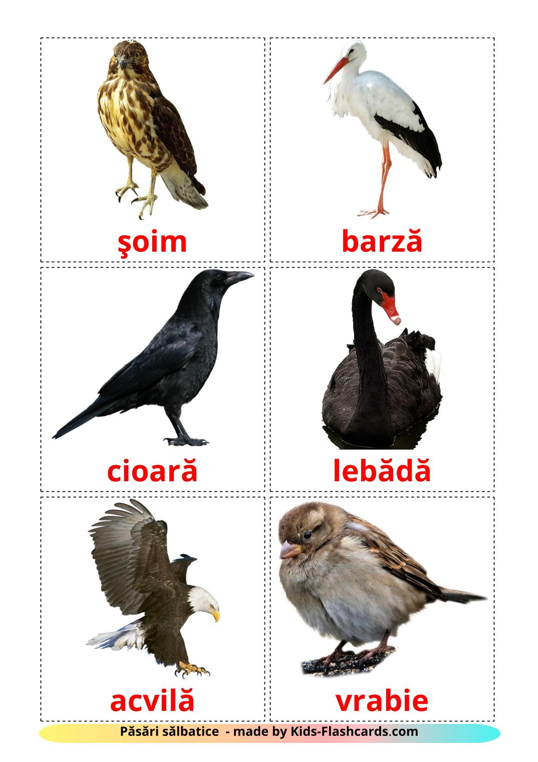 Wild birds - 17 Free Printable romanian Flashcards