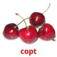 copt picture flashcards