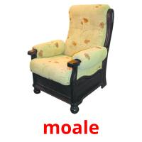 moale picture flashcards