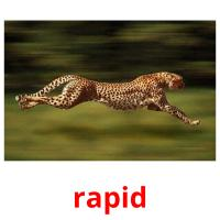 rapid picture flashcards
