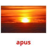 apus picture flashcards