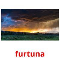 furtuna picture flashcards