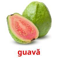 guavă picture flashcards