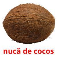nucă de cocos picture flashcards
