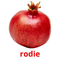 rodie picture flashcards