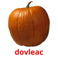 dovleac picture flashcards