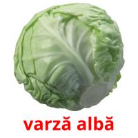 varză albă picture flashcards