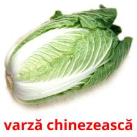 varză chinezească picture flashcards