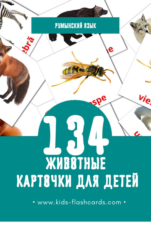 """""""Animale"""" - Визуальный Румынском Словарь для Малышей (128 картинок)"""