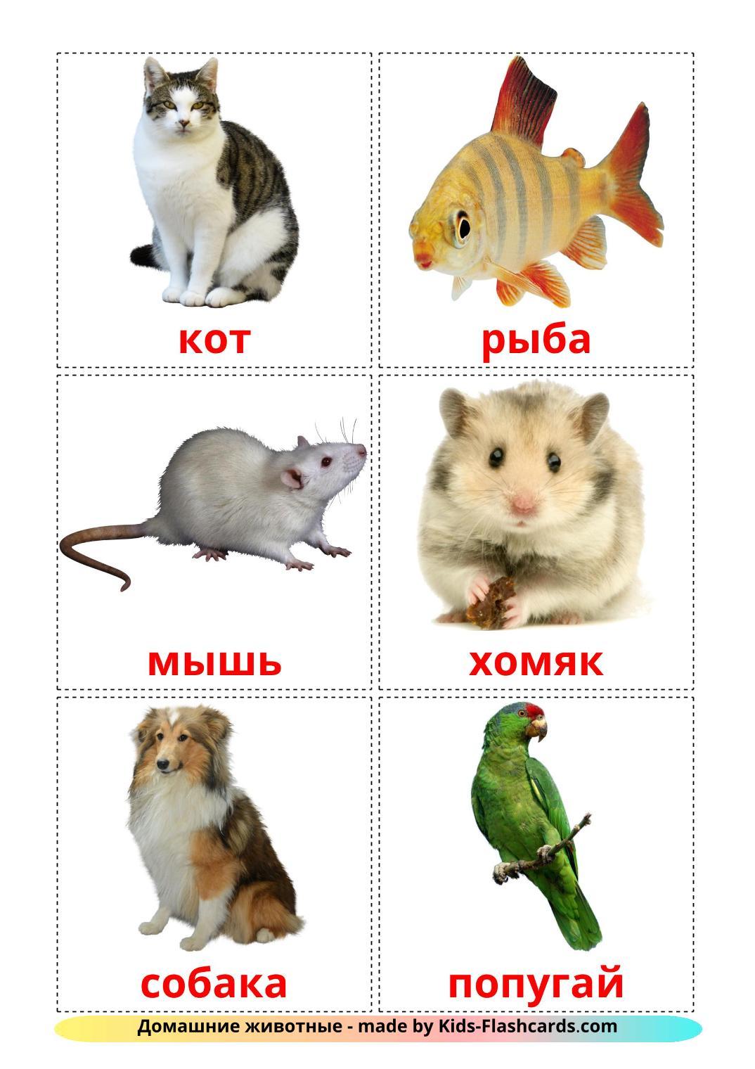 Домашние животные - 10 Карточек Домана на русском