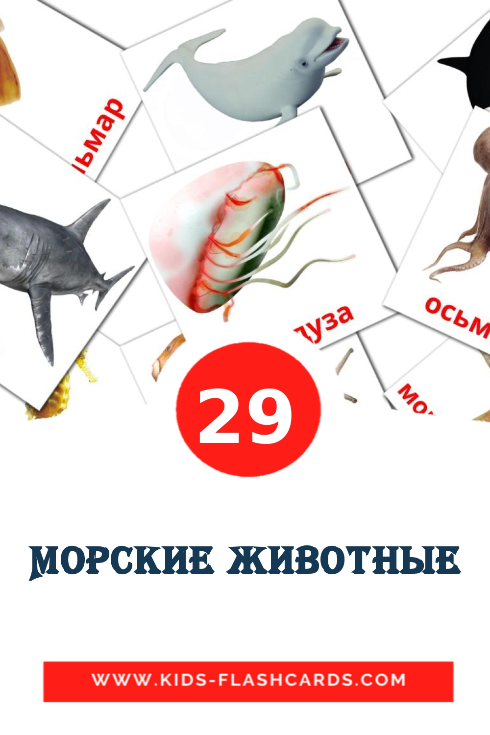29 Морские животные Picture Cards for Kindergarden in russian