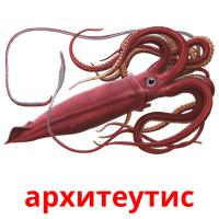 архитеутис picture flashcards