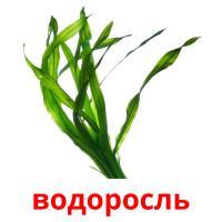 водоросль picture flashcards