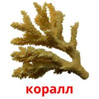 коралл picture flashcards