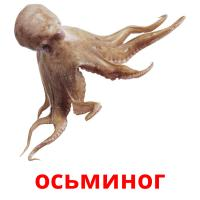 осьминог picture flashcards