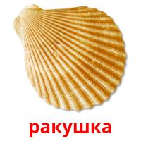 ракушка picture flashcards