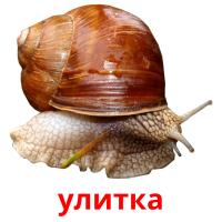 улитка picture flashcards