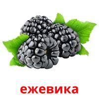 ежевика picture flashcards