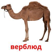 верблюд picture flashcards