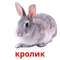 кролик picture flashcards