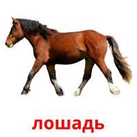 лошадь picture flashcards