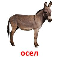 осел picture flashcards