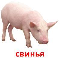 свинья picture flashcards
