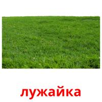 лужайка picture flashcards