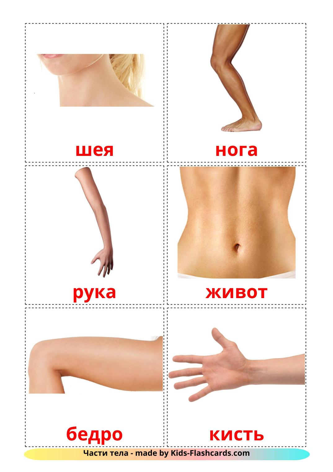 Body Parts - 26 Free Printable russian Flashcards