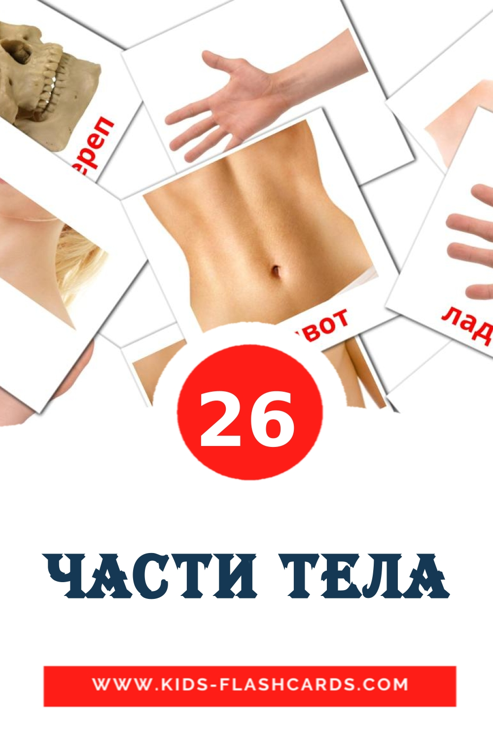 26 Части тела Picture Cards for Kindergarden in russian