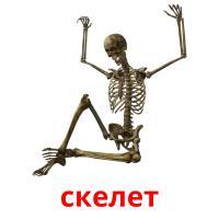 скелет picture flashcards