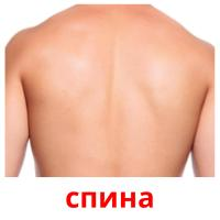 спина picture flashcards