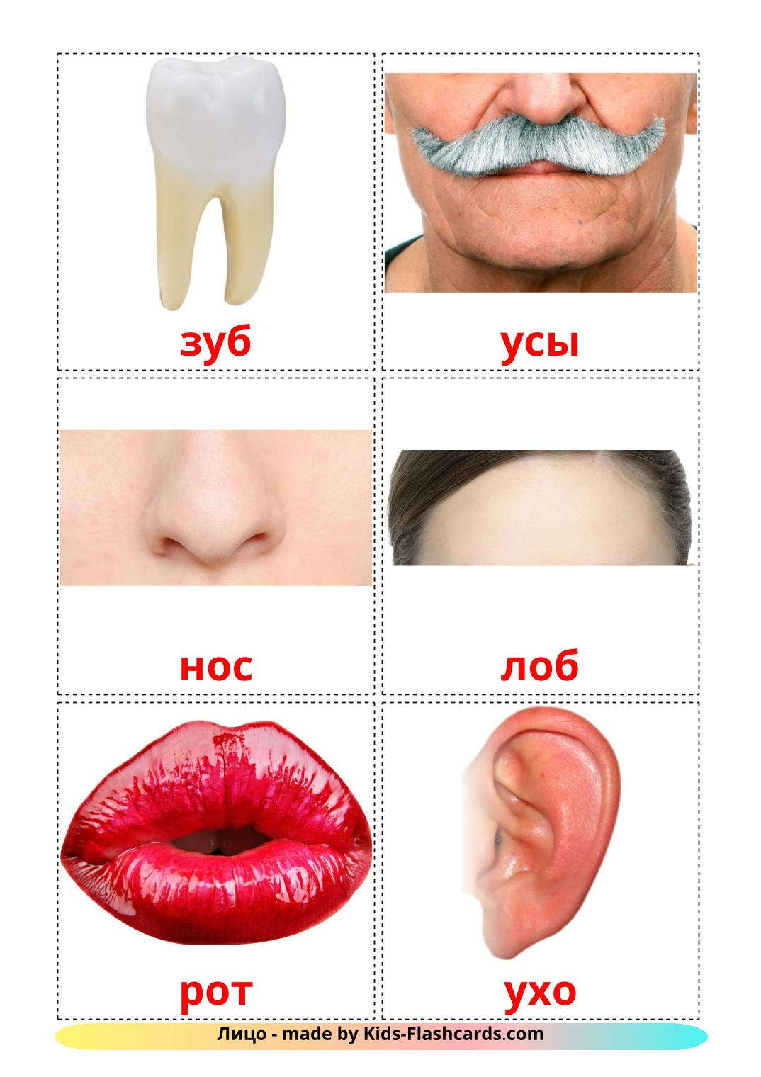 Face - 20 Free Printable russian Flashcards