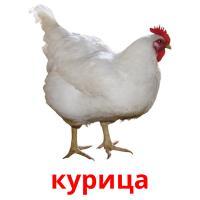 курица picture flashcards