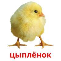 цыплёнок picture flashcards