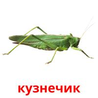 кузнечик picture flashcards