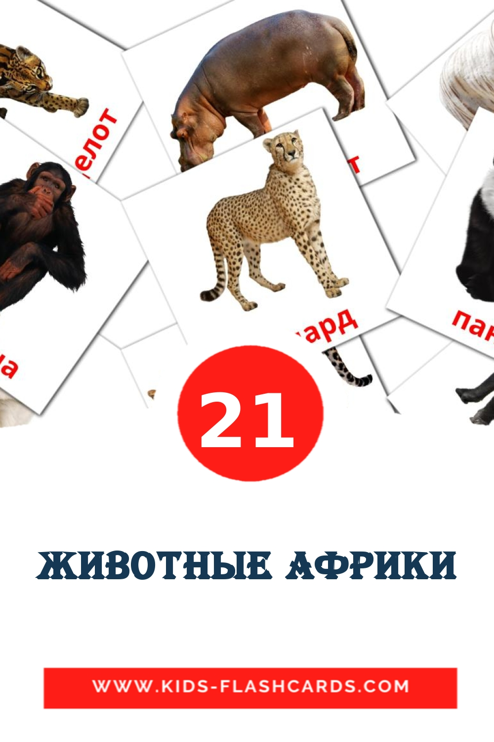 21 Животные африки Picture Cards for Kindergarden in russian
