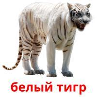 белый тигр карточки энциклопедических знаний